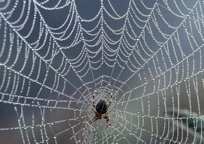 A spider web made from silk